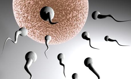sperma