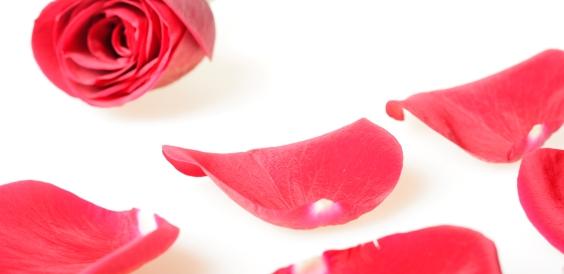 stockvault-rose-petals121635